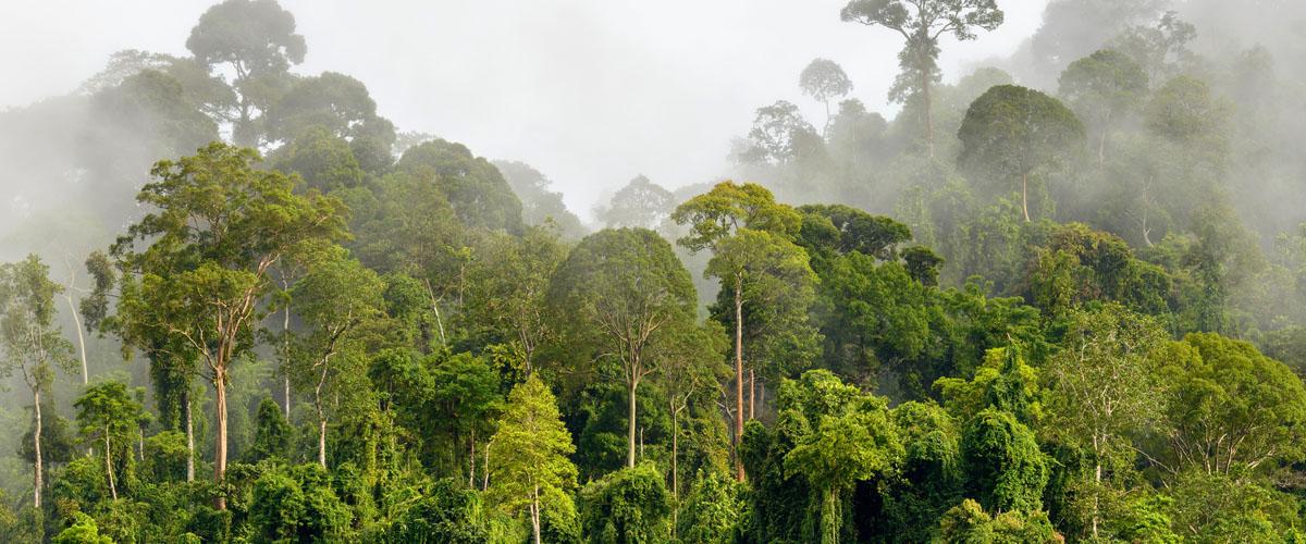 Forest carbon offsets