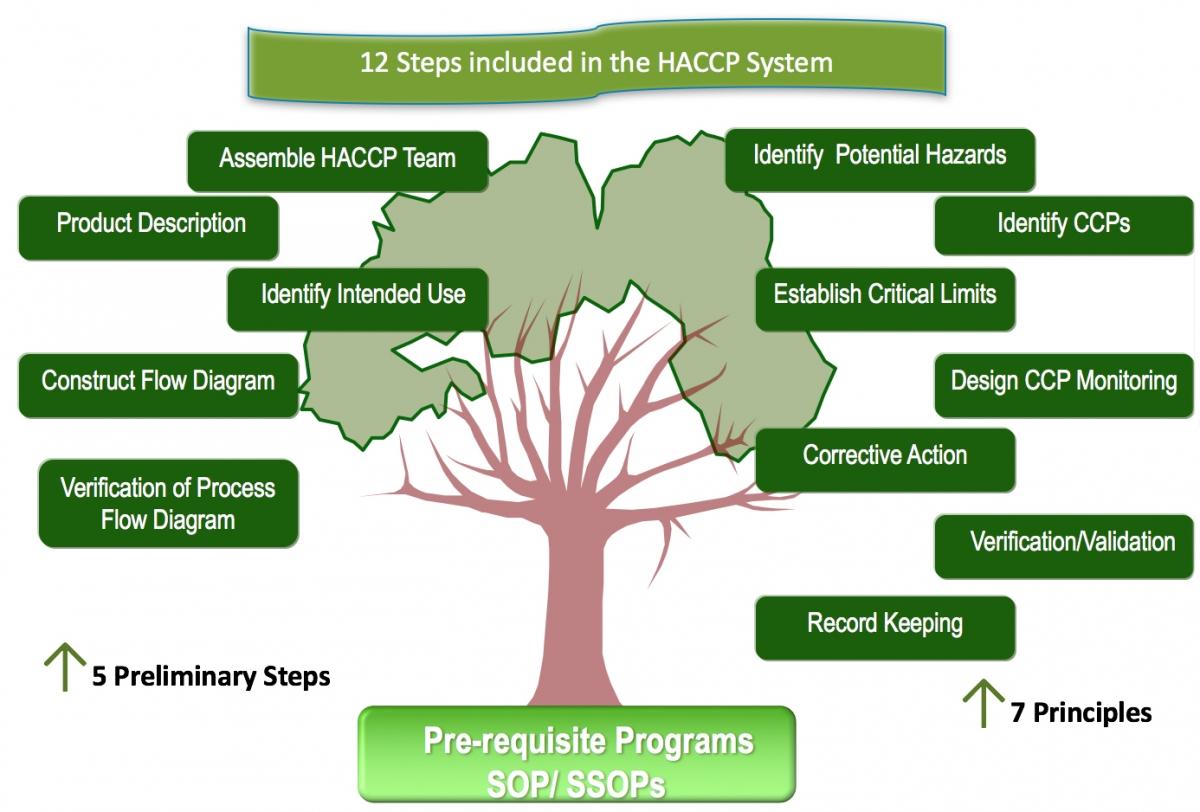 haccp 12 steps