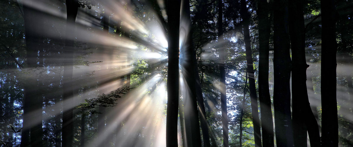 Sun shining through a forest