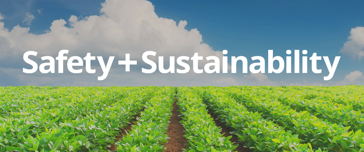 Sustainably grown crop field
