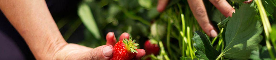 Introducción a la certificación Non-GMO Project